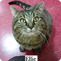 Adopt A Pet :: Ellie - Lakewood, CO