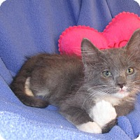 Adopt A Pet :: Baby Joe - Mebane, NC