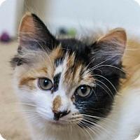 Adopt A Pet :: Noodles - Winchester, CA