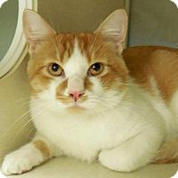 Adopt A Pet :: Charley - Tulsa, OK