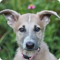 Adopt A Pet :: Fancy - Nanuet, NY