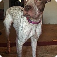 Adopt A Pet :: Dreamer - Phoenix, AZ