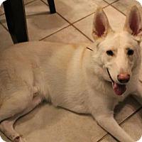 Adopt A Pet :: Seymour - Hooksett, NH