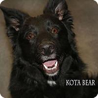 Adopt A Pet :: Kota Bear - Idaho Falls, ID