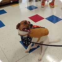 Adopt A Pet :: Emmett - Hanover, PA