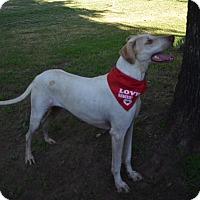 Adopt A Pet :: Dover - Burleson, TX
