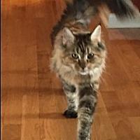 Adopt A Pet :: TN - Cyprus (CP) - Big Stone Gap, VA