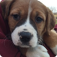 Adopt A Pet :: Pocahontas - PLAINFIELD, IN