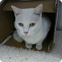 Adopt A Pet :: Snow - Miami Shores, FL