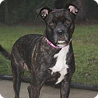 Adopt A Pet :: Rosa - Tallahassee, FL