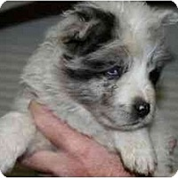 Adopt A Pet :: Charlotte - Mesa, AZ