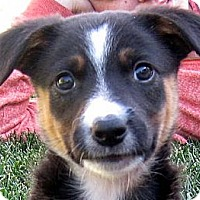 Adopt A Pet :: Baby Bleu - Oakley, CA