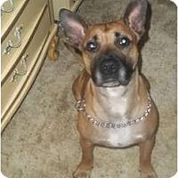 Adopt A Pet :: Zack - Irvington, KY
