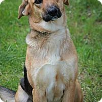 Adopt A Pet :: Ava - Evergreen Park, IL