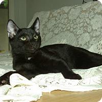 Adopt A Pet :: Dublin - Ocala, FL