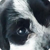 Adopt A Pet :: Sally - Meridian, ID