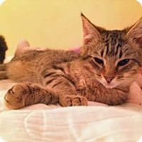 Adopt A Pet :: Jill - Merrifield, VA
