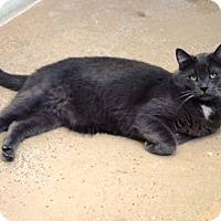 Adopt A Pet :: Dusty - Belleville, MI