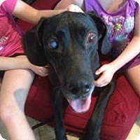 Adopt A Pet :: Daisy - Springfield, IL