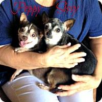 Adopt A Pet :: Peppy/Sissy PENDING ADOPTION - Cushing, OK