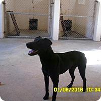 Adopt A Pet :: Jax (courtesy listing) - Bartonsville, PA