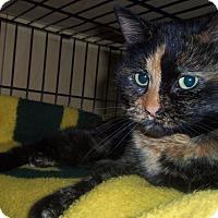Adopt A Pet :: EMMY - Medford, WI