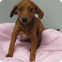Adopt A Pet :: Anna - Groton, MA