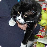 Adopt A Pet :: Silverado - Brooklyn, NY