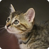 Adopt A Pet :: Minnie - Grants Pass, OR