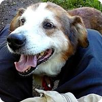 Adopt A Pet :: Rick *deaf - Livonia, MI