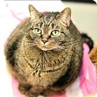 Adopt A Pet :: Adaline - Charlottesville, VA