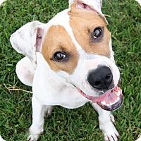 Adopt A Pet :: Selina Meyer - Jersey City, NJ