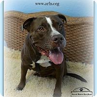 Adopt A Pet :: Jeter - Brooksville, FL