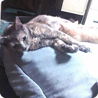 Adopt A Pet :: Paisley - Putnam, CT