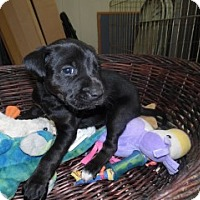 Adopt A Pet :: Willow - Clarksville, AR