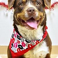 Adopt A Pet :: Wilson - Dublin, CA