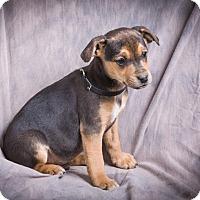 Adopt A Pet :: BRUTUS - Anna, IL
