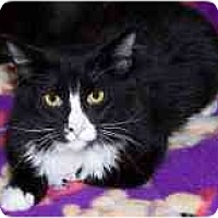 Adopt A Pet :: Fearless - Sacramento, CA