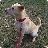 Adopt A Pet :: Julie - Orange Park, FL