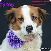 Adopt A Pet :: Sissy - Plano, TX