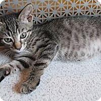 Adopt A Pet :: Nayru - Acme, PA