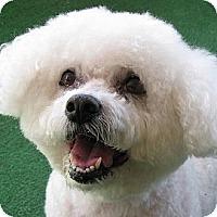 Adopt A Pet :: Jessica - La Costa, CA