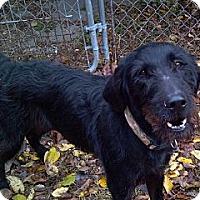 Adopt A Pet :: Sydney - Geneseo, IL