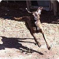 Adopt A Pet :: Tequila - Vidor, TX