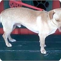 Adopt A Pet :: Tiny Timbo - Sugarland, TX