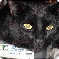 Adopt A Pet :: Ebony - Riverside, RI