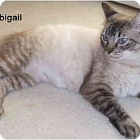 Adopt A Pet :: Abigail - Portland, OR