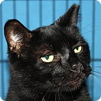 Adopt A Pet :: Buddy - North Branford, CT