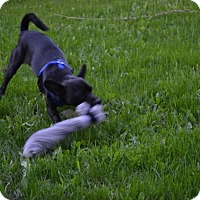 Adopt A Pet :: Pumba - Saskatoon, SK