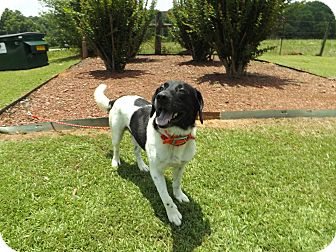 Beagle Mix Dog for adoption in Thomaston, Georgia - Dirk